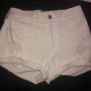 Hollister Shorts<3